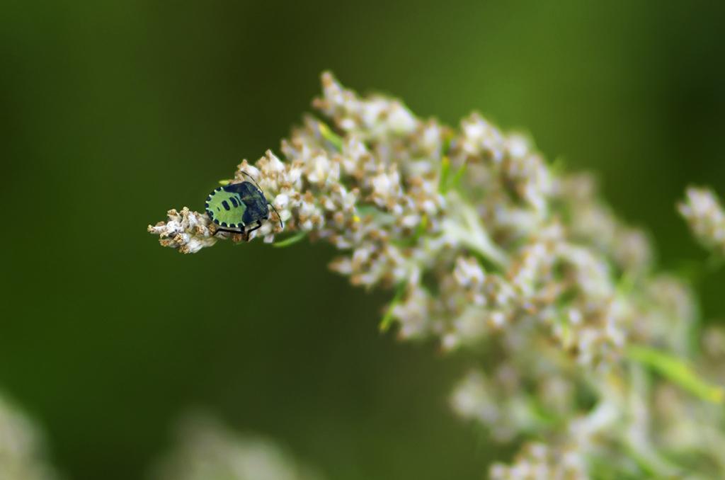 Insekt på buske