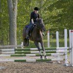 Hästhoppning