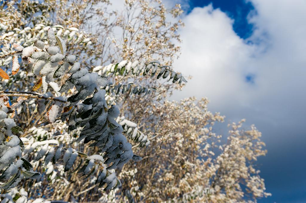 Gröna blad. Snö