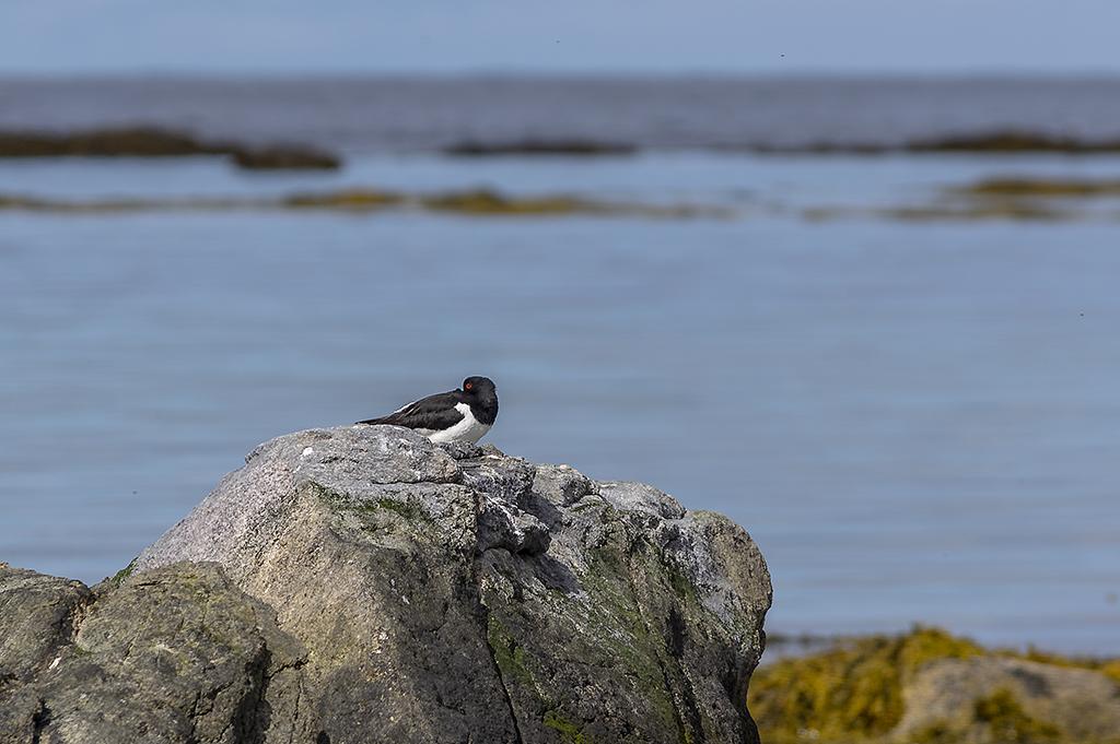 Ensam fågel